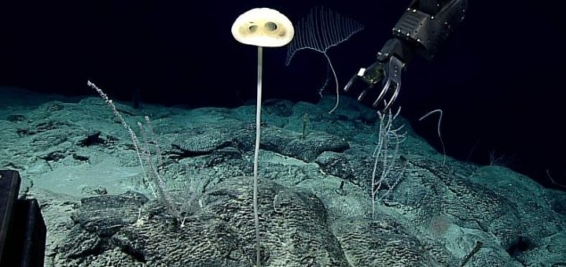 Forma de vida descoberta no fundo do mar.